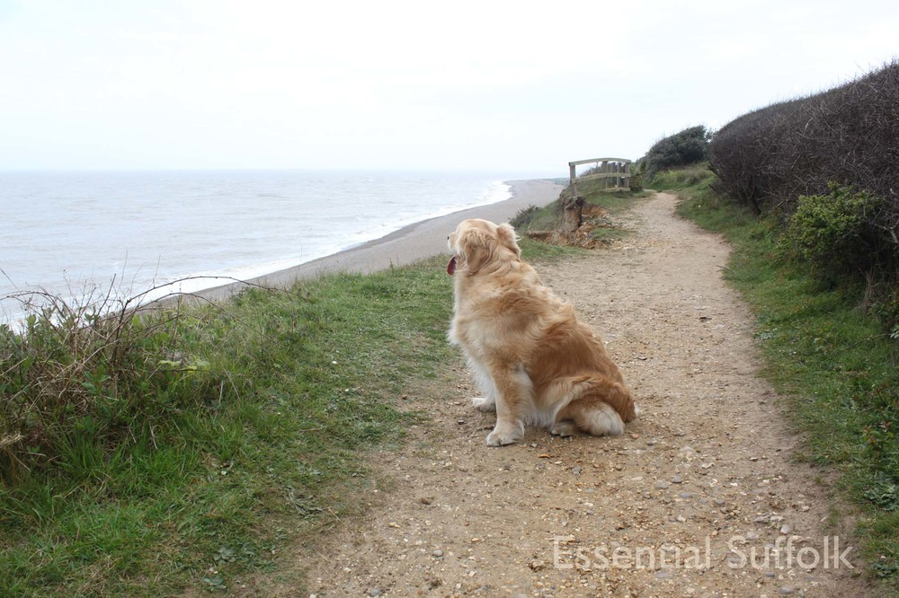 Thorpeness Dog Walk12.jpg