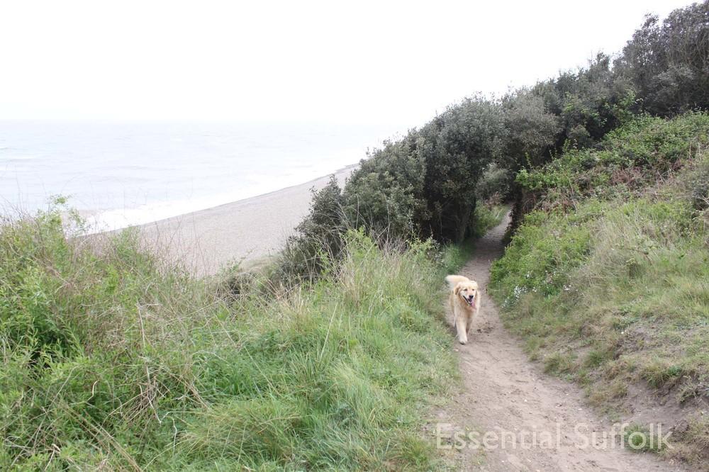 Thorpeness Dog Walk14.jpg