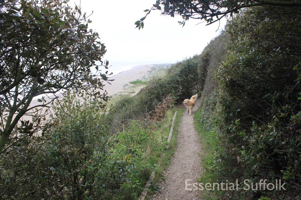 Thorpeness Dog Walk15.jpg