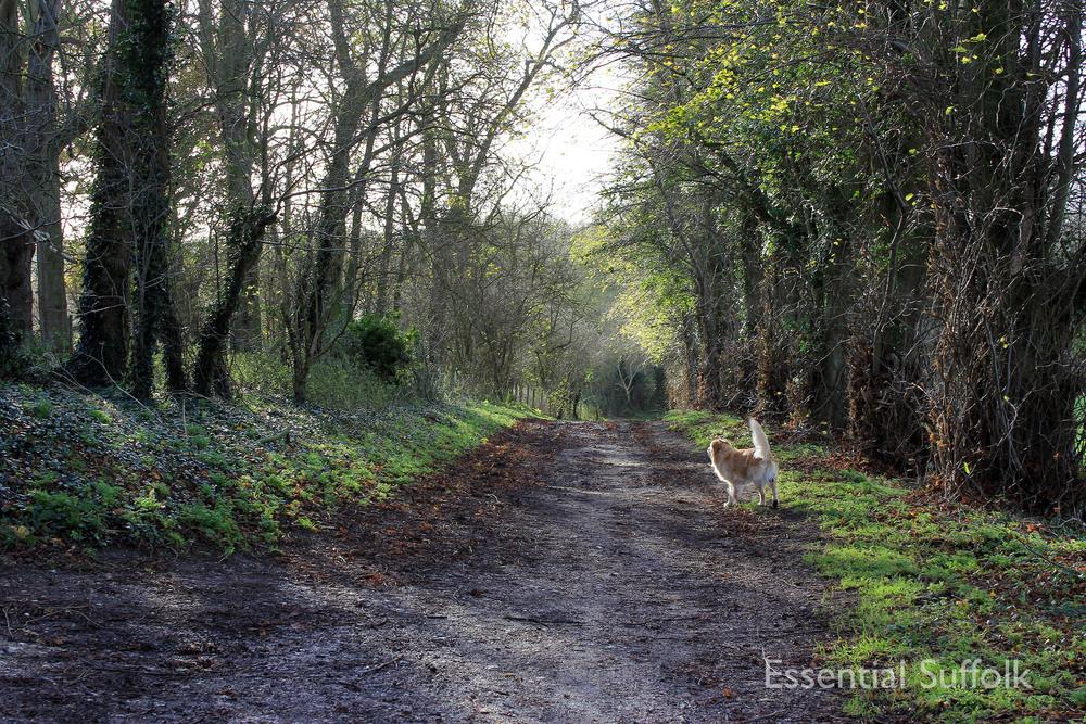 Brandeston Dog Walk 001.jpg