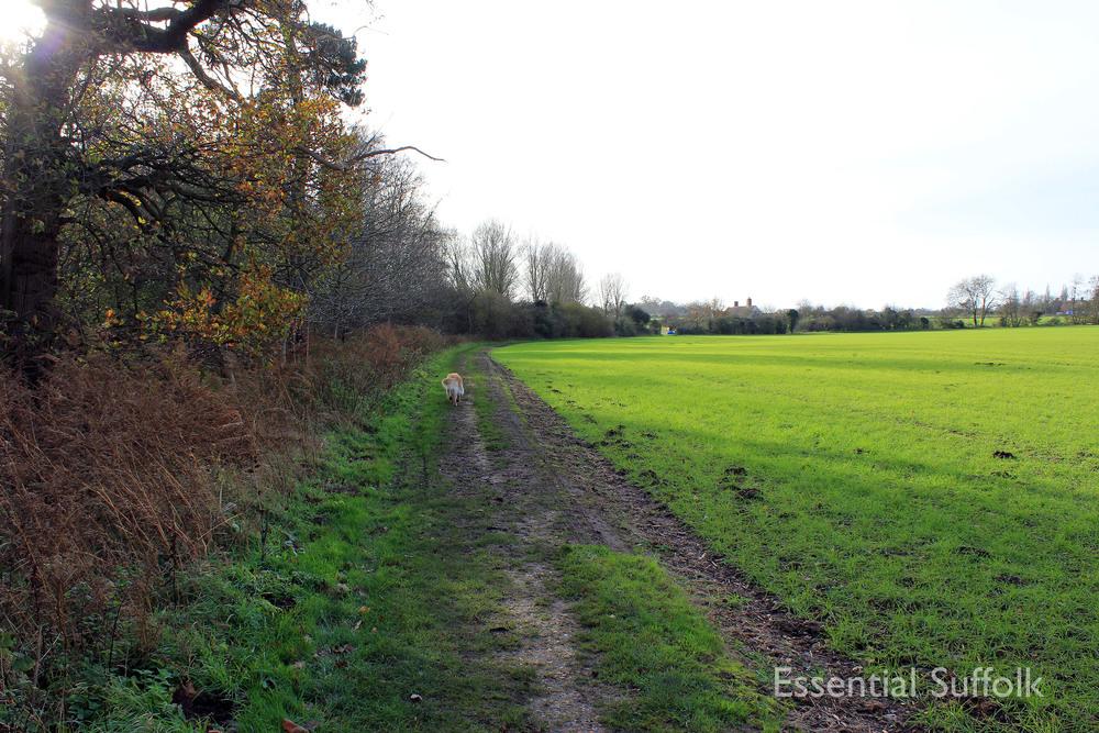 Brandeston Dog Walk 006.jpg