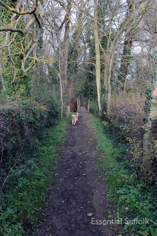 Brandeston Dog Walk 010.jpg