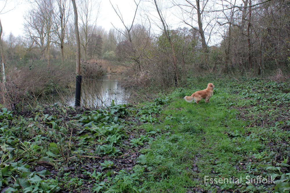Brandeston Dog Walk 014.jpg