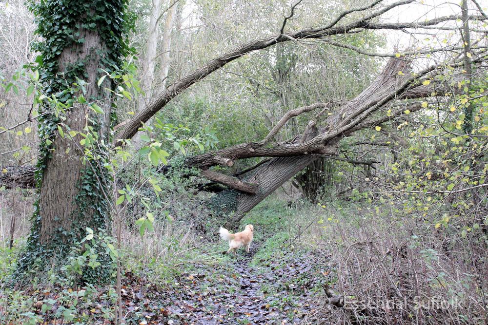 Brandeston Dog Walk 019.jpg