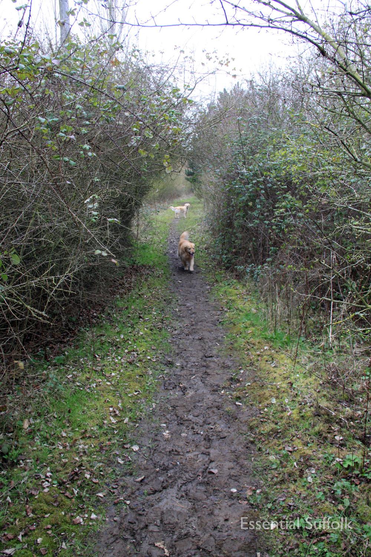 Stowupland Dog Walk 008.jpg