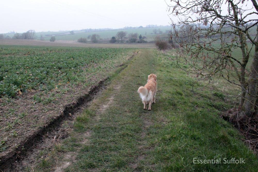 Stowupland Dog Walk 014.jpg