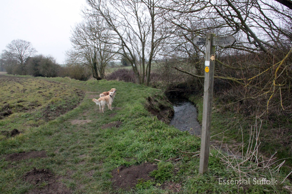 Stowupland Dog Walk 015.jpg