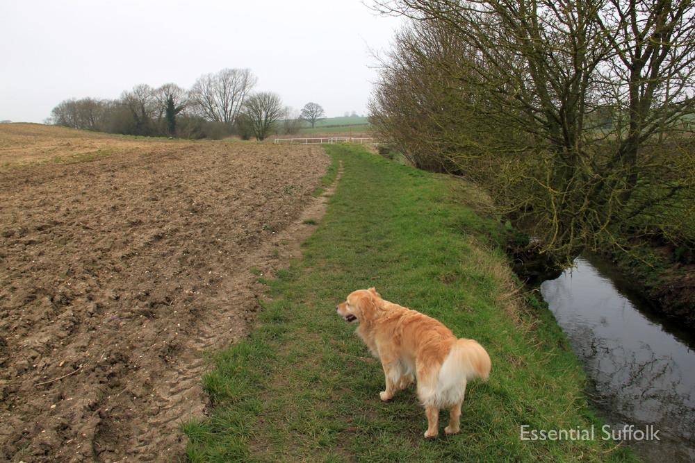 Stowupland Dog Walk 017.jpg
