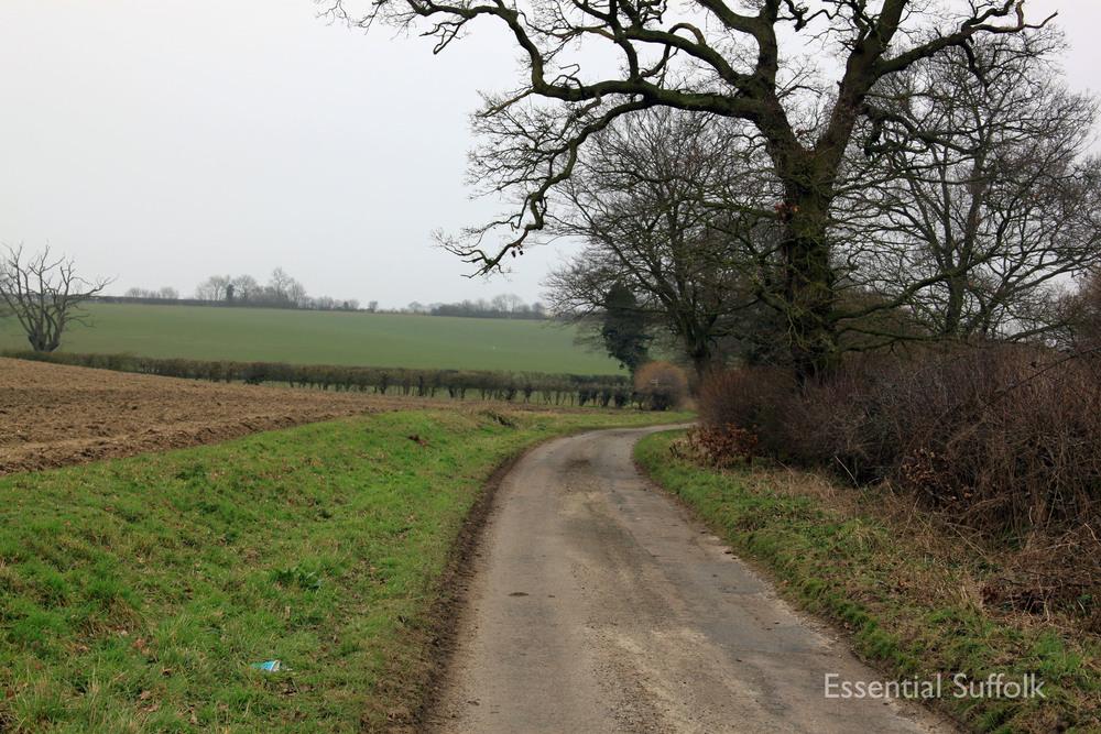 Stowupland Dog Walk 019.jpg