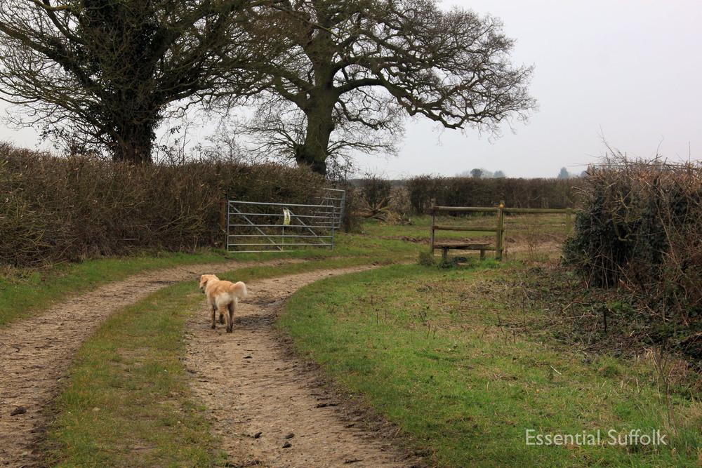 Stowupland Dog Walk 023.jpg