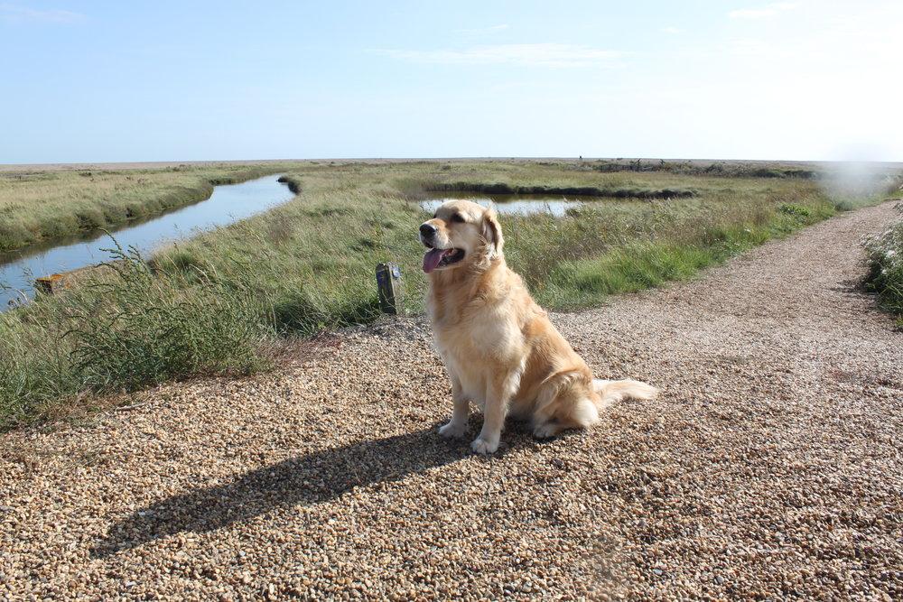 Dunwich dog walk 2 328.JPG