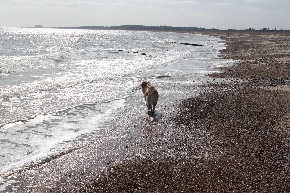Dunwich dog walk 2 440.JPG