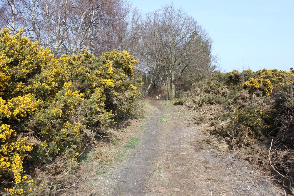 Dunwich walk no 3 138.JPG