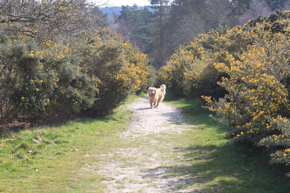 Dunwich walk no 3 219.JPG