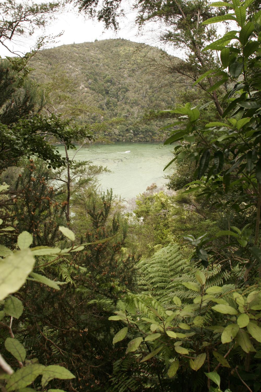 Ferns - The Koru - Dense, Lush, Fertile