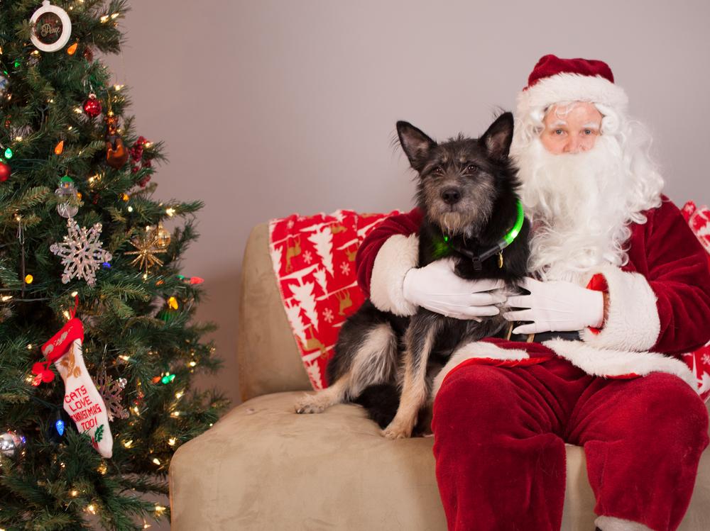 Merry Christmas, Vortexans!