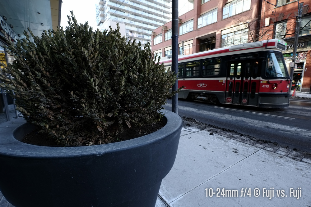 Shrub and a streetcar