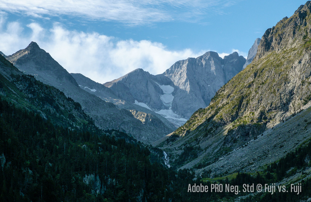 6 Adobe PRO Neg Std.jpg