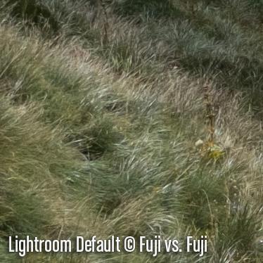 LightroomD3.jpg