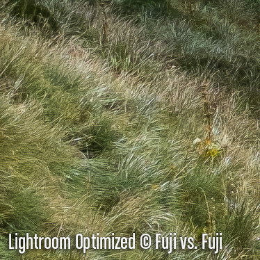 LightroomO3.jpg