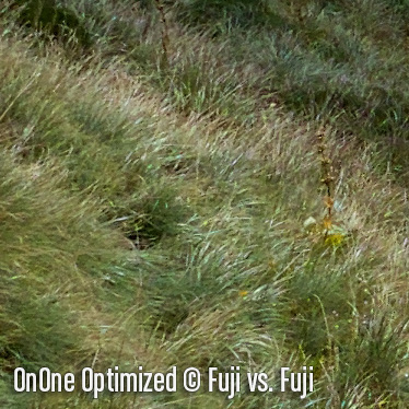OnOneO3.jpg