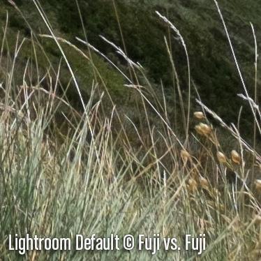 LightroomD6.jpg