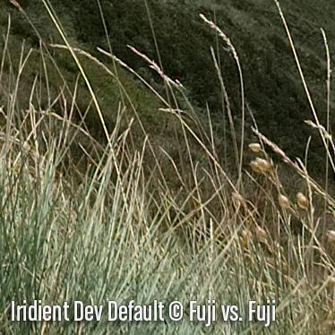 IridientDevD6.jpg
