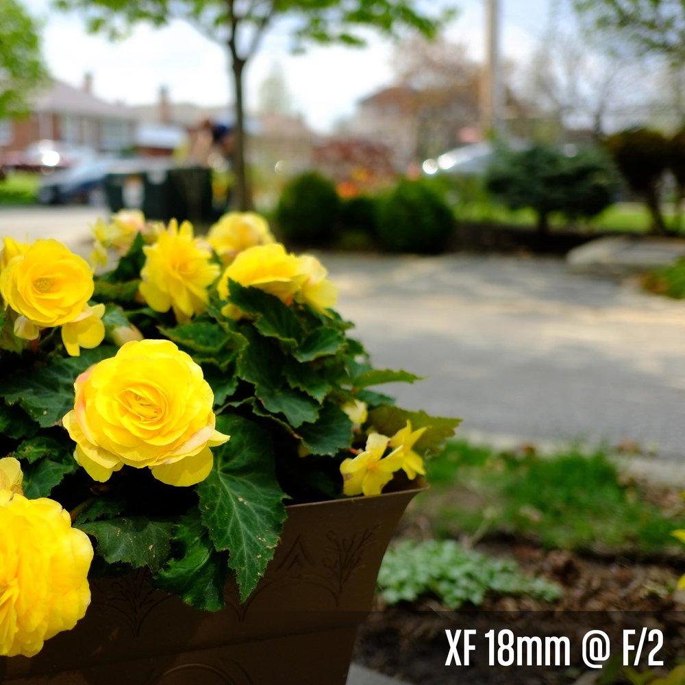 XF 18mm @ F_2.jpg