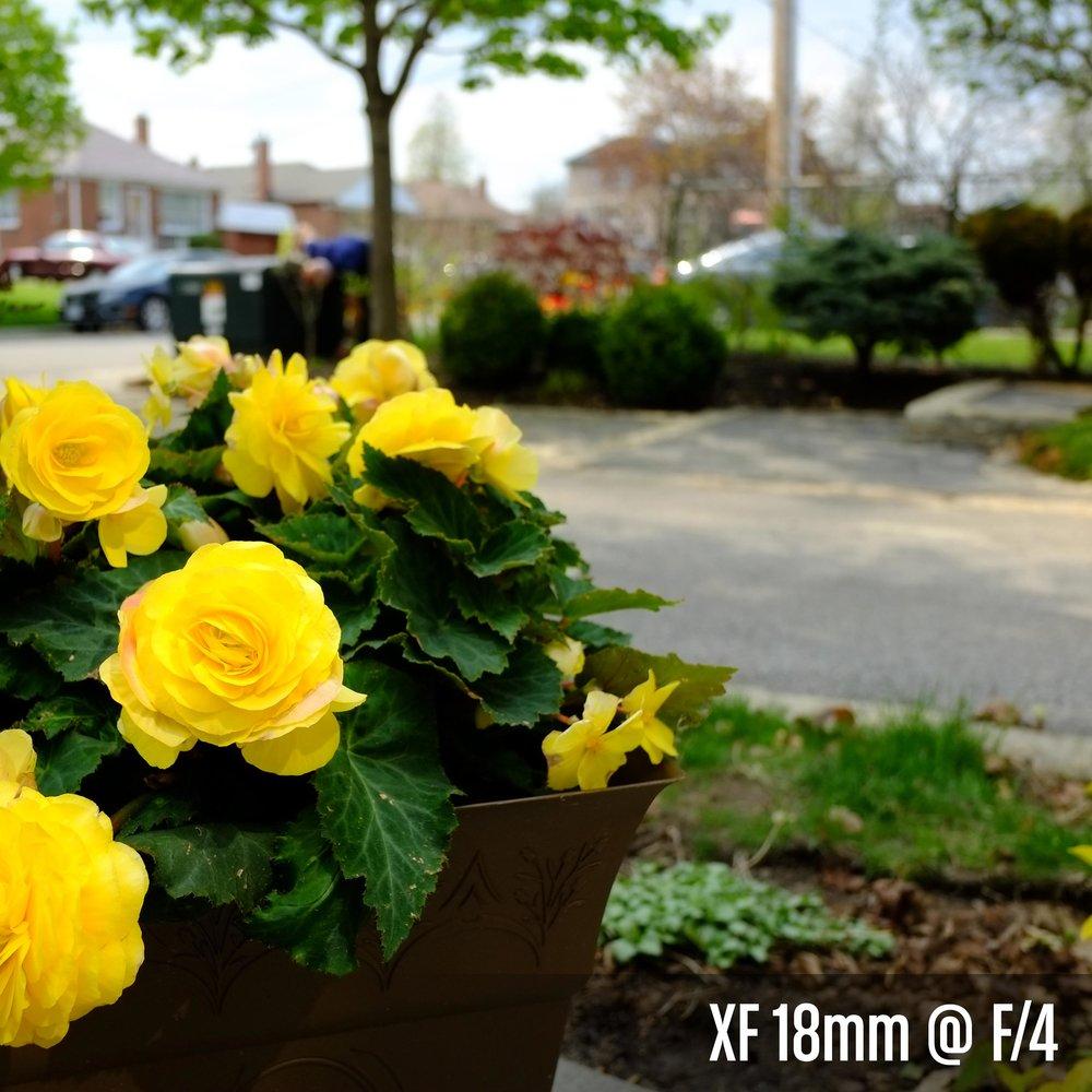 XF 18mm @ F_4.jpg