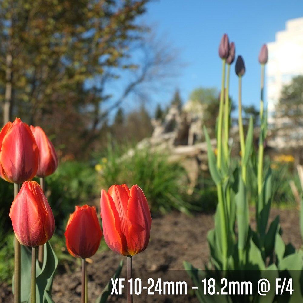 XF 10-24mm – 18.2 @ F_4.jpg