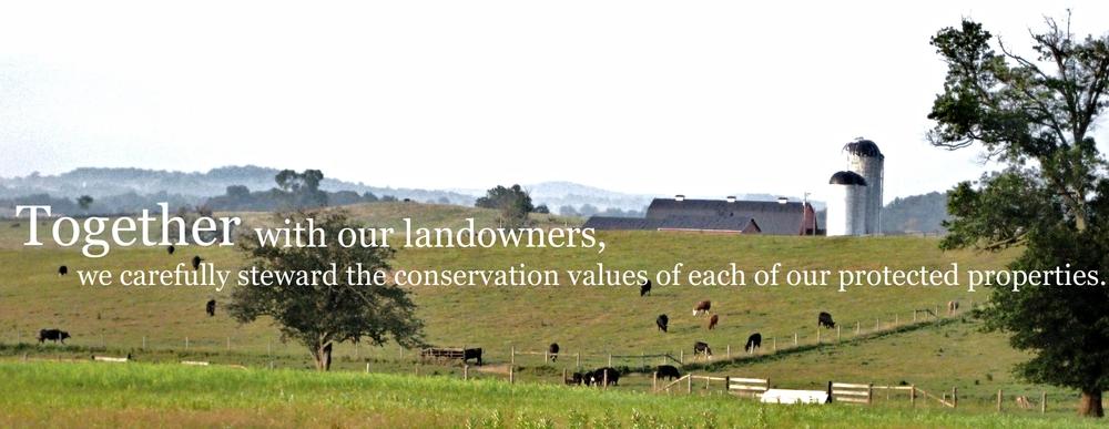 cows and silo.jpg