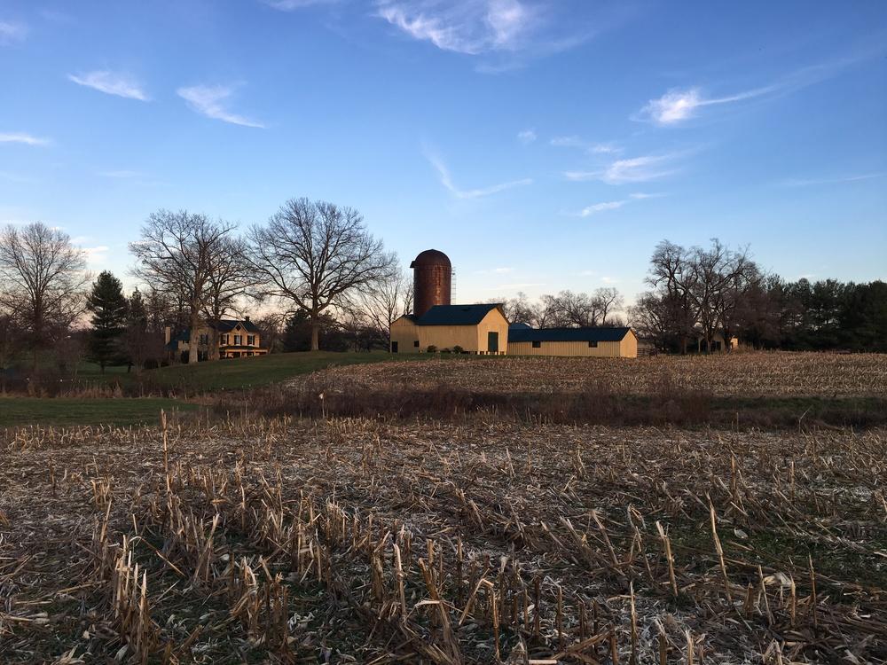 Juno Farm
