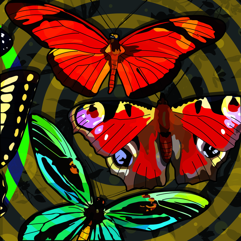Butterflyroom3.jpg