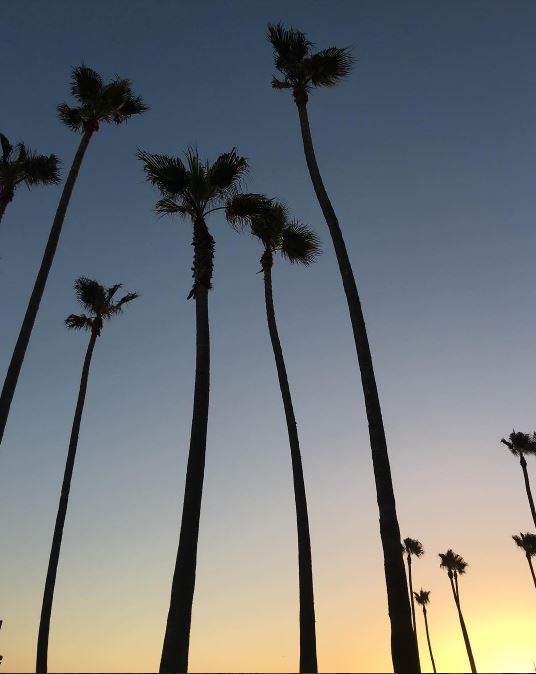 Goodnight  #paradise   #twilight   #palmtrees   #california   #sandiego   #coronado   #sunset