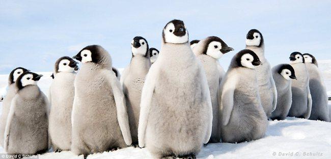 favourite-penguin.jpg
