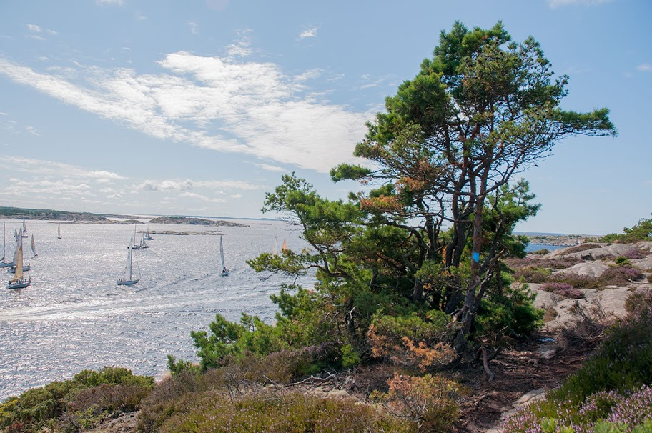 De fleste av gjestene ankommer Homlungen til fots fra Skjærhalden hvor man har hentet nøkkel til fyret, og til robåt som man frakter seg selv ut på noen få meter til fyrholmen. Turen fra Skjærhalden tar omtrent 15 minutter. Fotturen vandres i typisk Hvaler-natur med lave og krokete trær, og fra marken dufter det deilig lyng. Utsikten til Sverige, Skagerrak og Hvalers flotte skjærgård får man gratis med på hele fotturen.