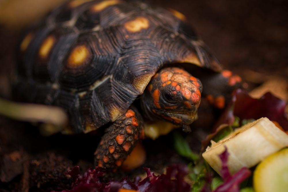 Charlie The Tortoise-31 - Copy.jpg