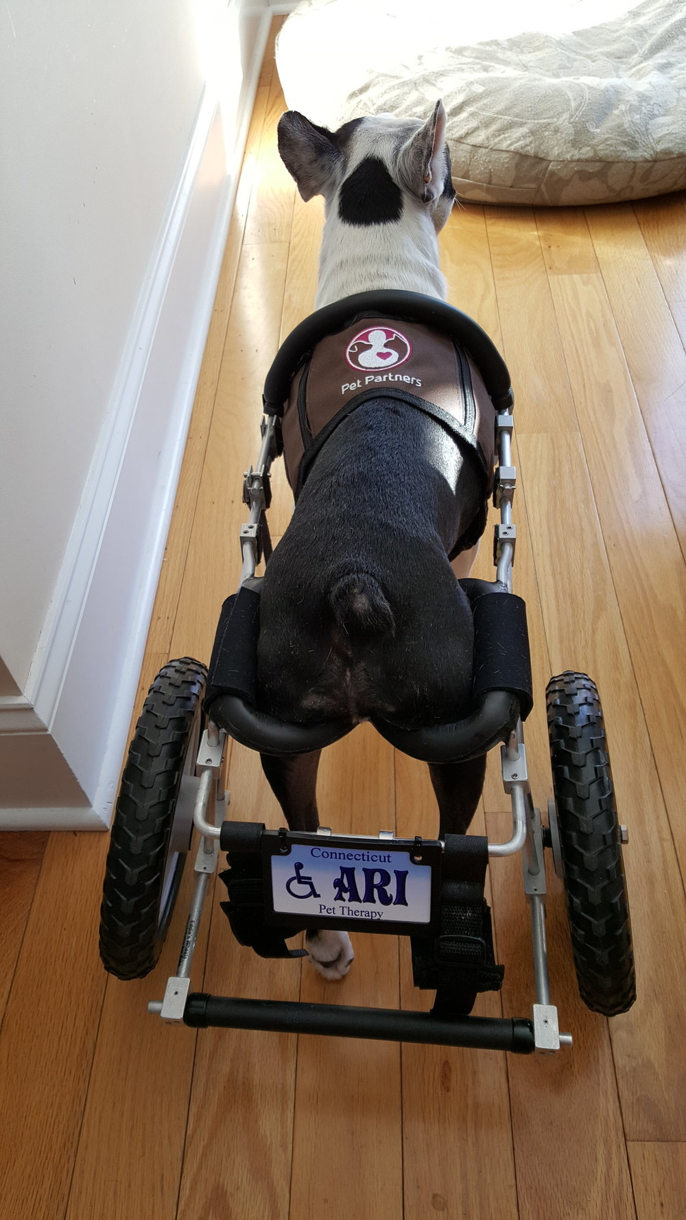 Ari even has a special license plate for his sweet ride