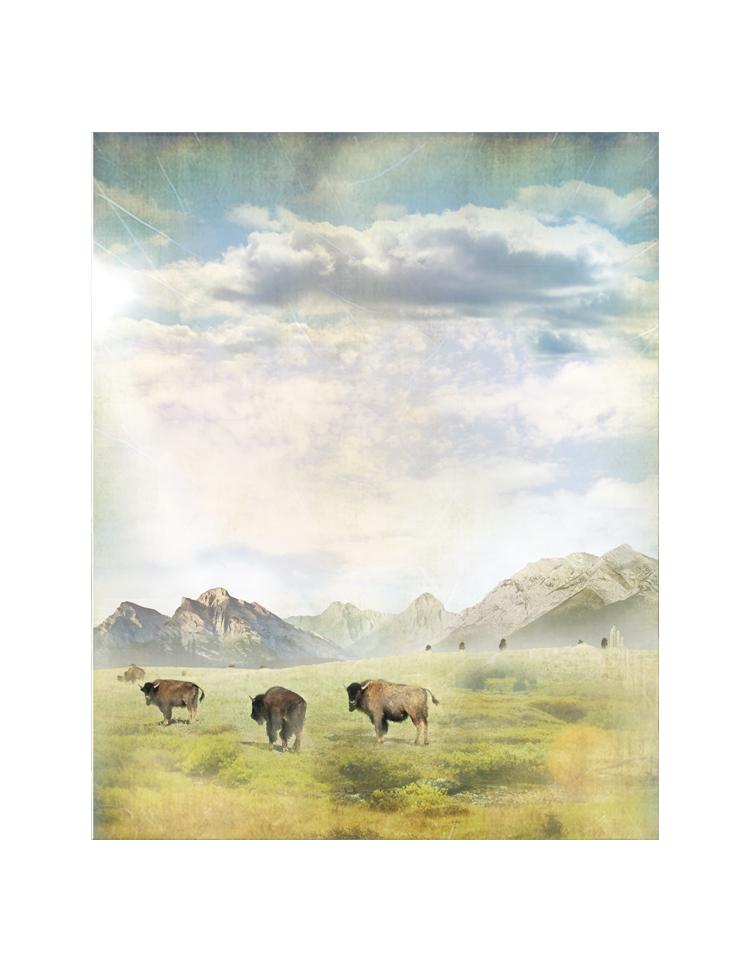 Vertical Alberta-Bison.jpg