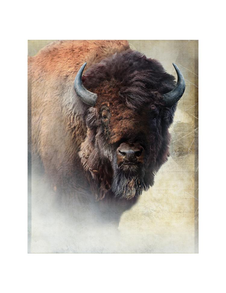Vertical Black Bison.jpg