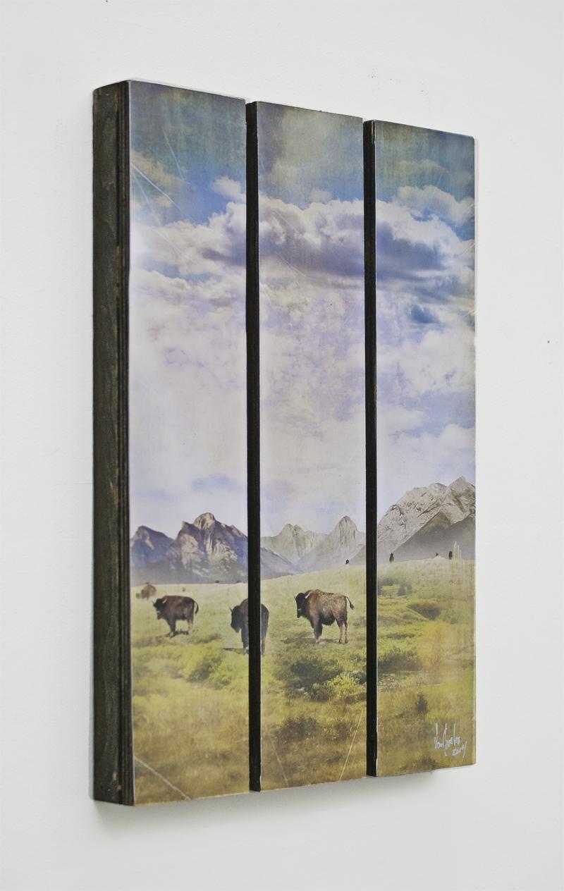 van charles alberta bison 11x17.jpg