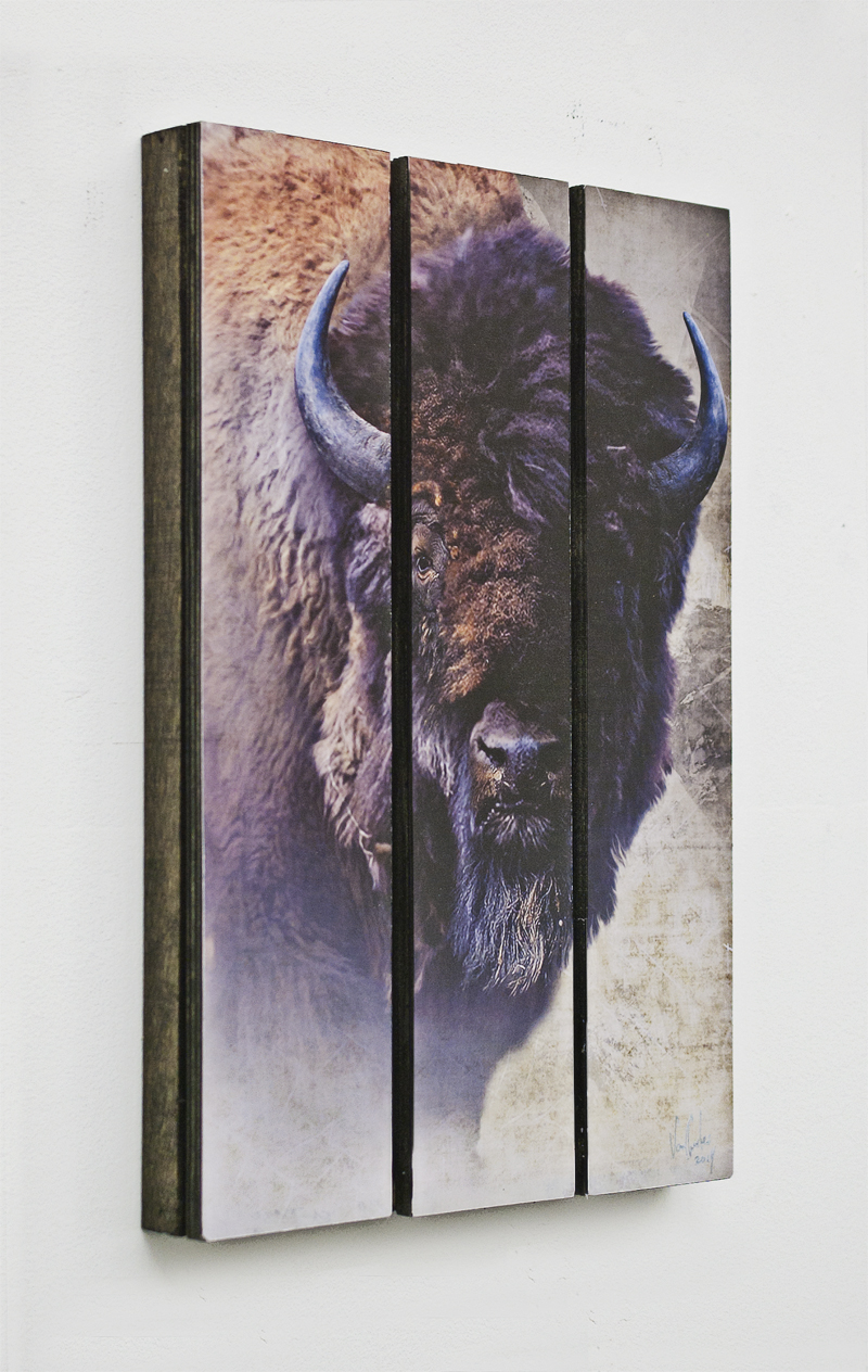 van charles black bison 11x17.jpg