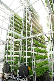Inverted conveyer belt rotates plants consistently to receive sunlight.
