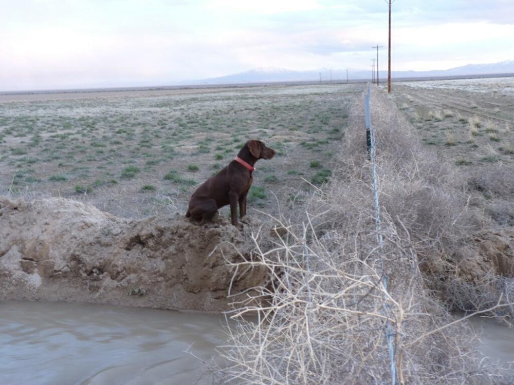 bullhead-hunting-club-bird-hunt-dog-fence.jpg