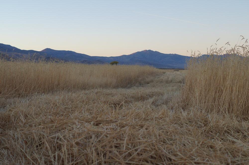 hunting pics 2016 and twins 056.JPG