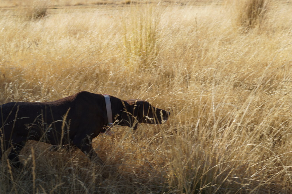 hunting pics 2016 and twins 192.JPG