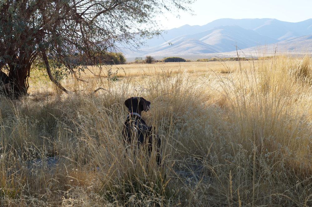 hunting pics 2016 and twins 195.JPG