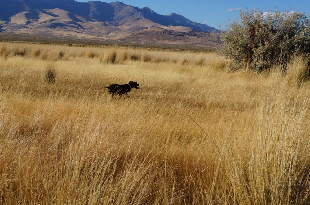hunting pics 2016 and twins 222.JPG