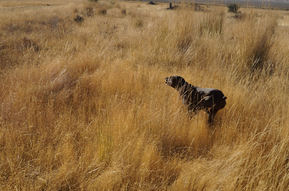 hunting pics 2016 and twins 224.JPG