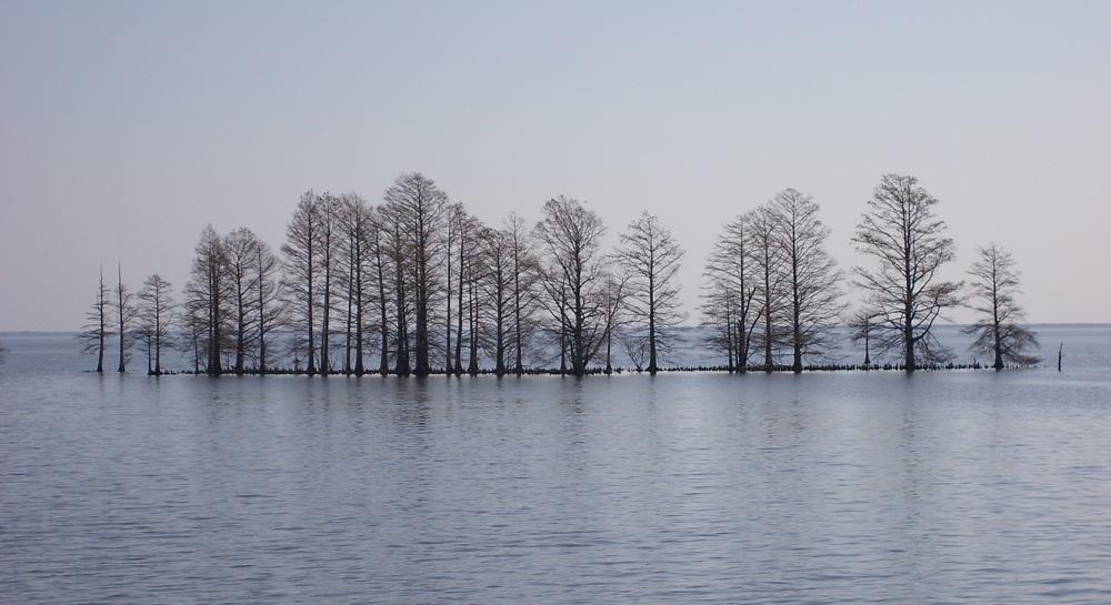 Trees_in_Lake_Mattamuskeet_edit.jpg
